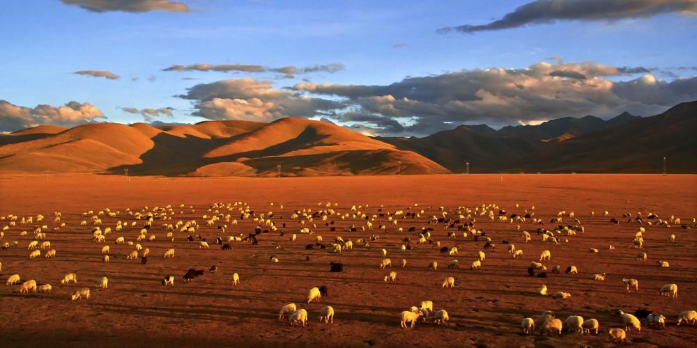 摄影家唐军:透过镜头展示大美西藏